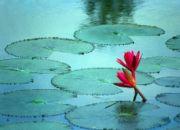 moving_company_bangladesh
