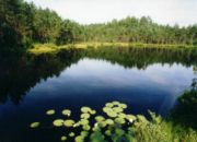 move_estonia