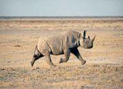 move_namibia